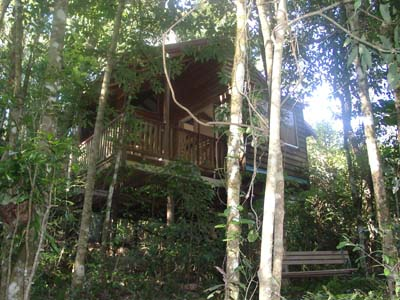 Adjinbilly Rainforest Retreat Cabins - Tourism Adelaide