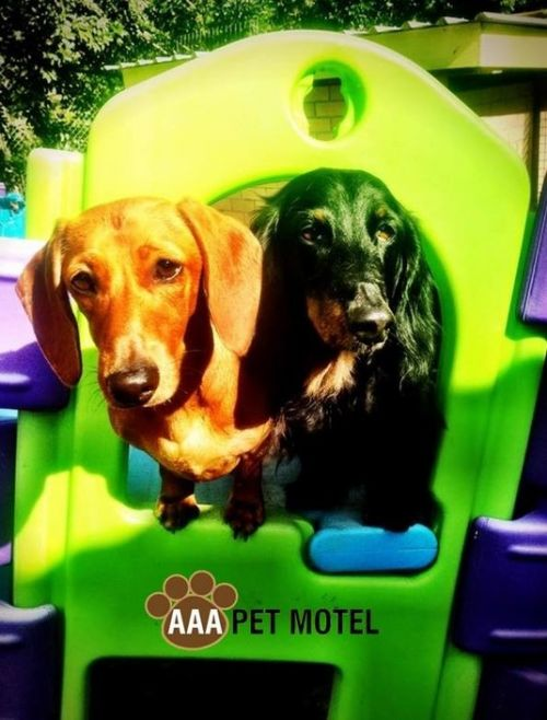 AAA Pet Motel - Tourism Adelaide