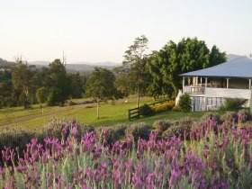 Blue Ridge Lavender Farm And Retreat - Tourism Adelaide