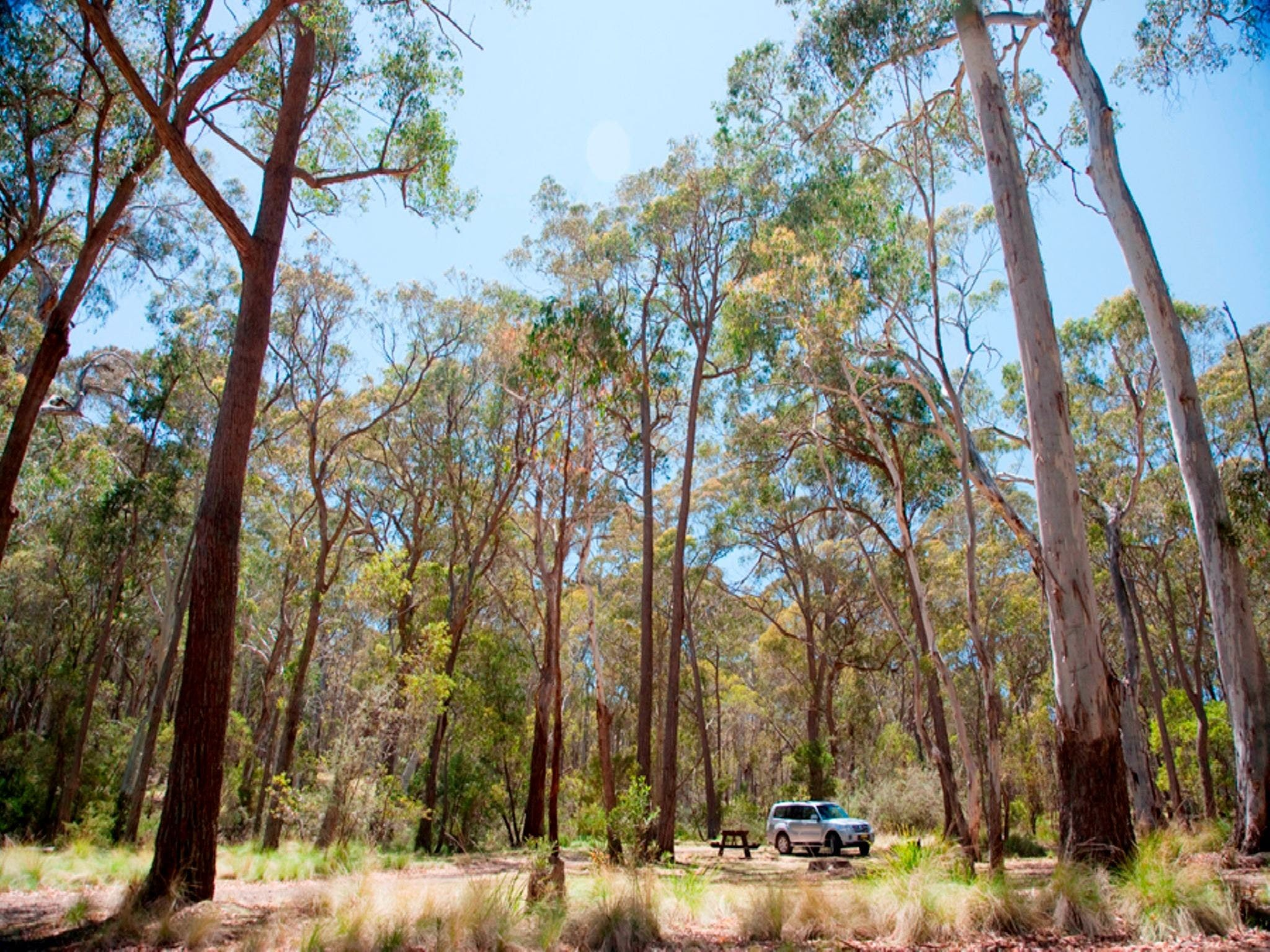 Coolah Tops National Park Camping - Tourism Adelaide
