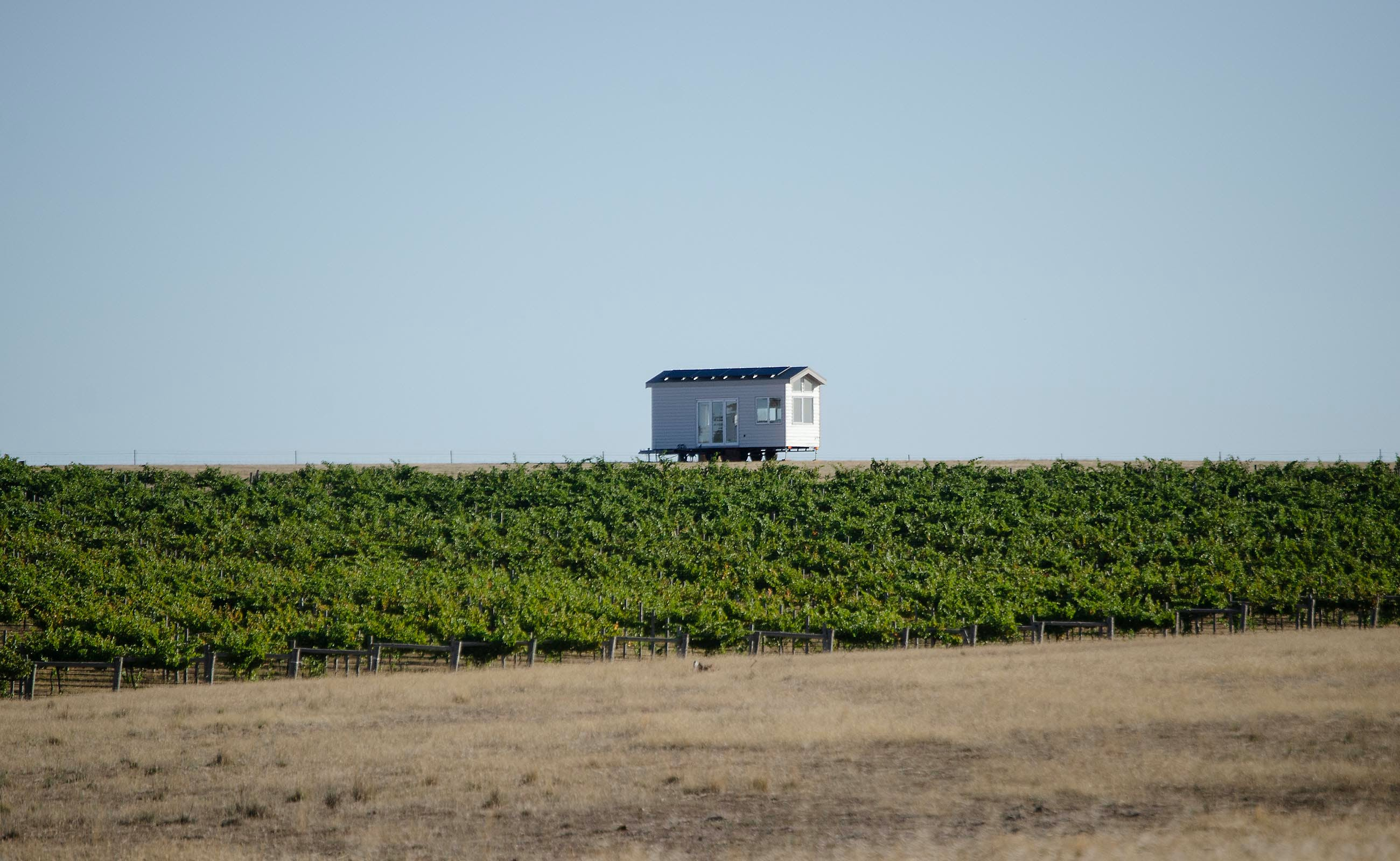 Hounds Run Vineyard - Tourism Adelaide