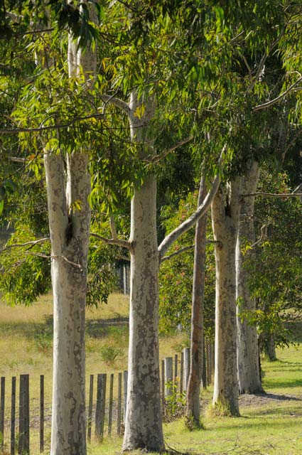 Stringybark Cottages - Tourism Adelaide