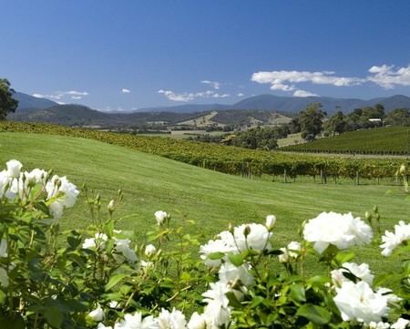 Balgownie Estate Vineyard Resort and Spa - Tourism Adelaide
