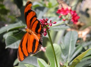 Butterfly Farm - Tourism Adelaide