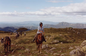 High Country Horses - Tourism Adelaide
