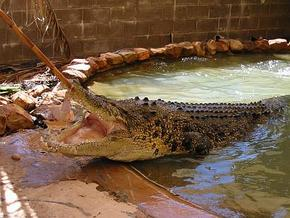 Wyndham Zoological Gardens and Crocodile Park - Tourism Adelaide