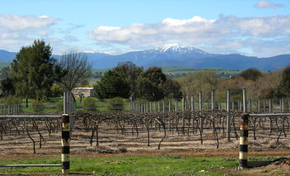 Buller View Wines - Tourism Adelaide