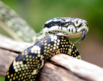 Reptile Encounters - Tourism Adelaide