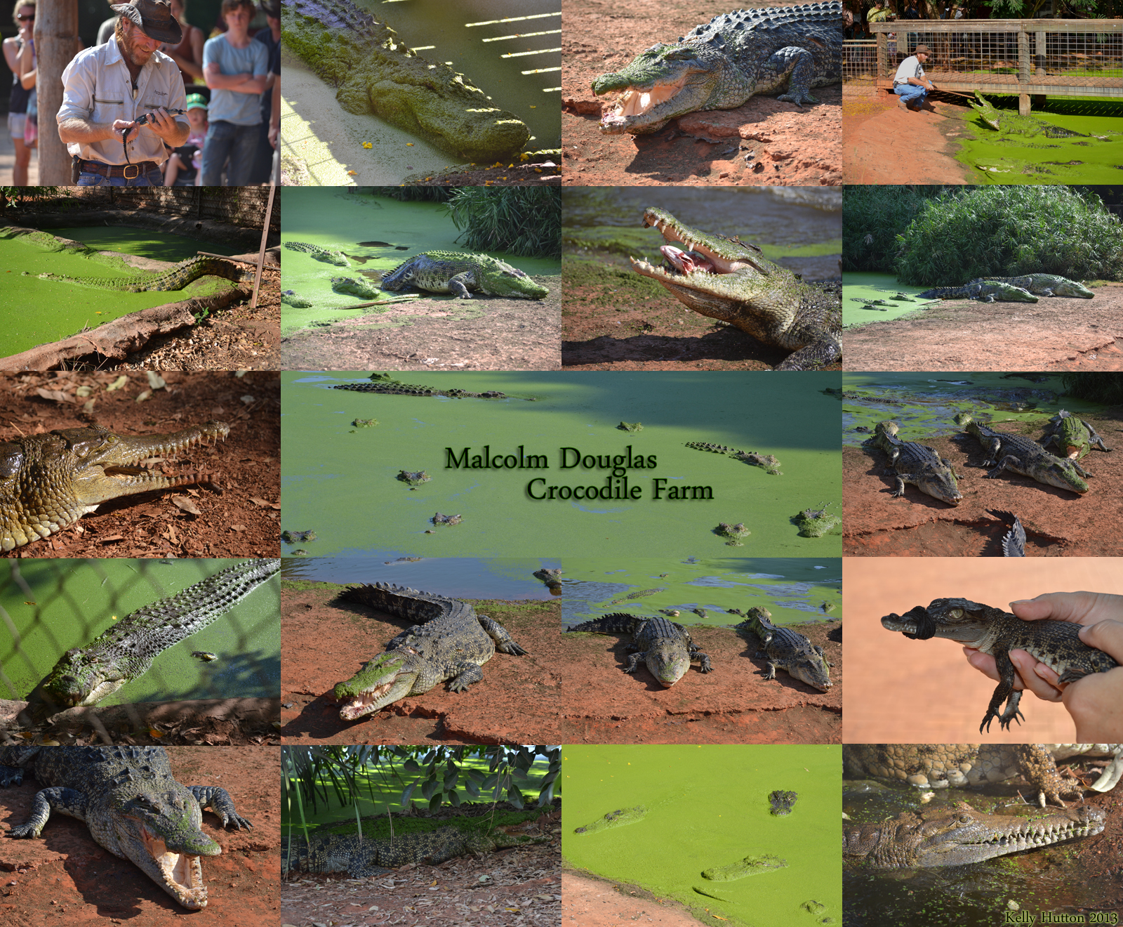 The Malcolm Douglas Crocodile Park - Tourism Adelaide