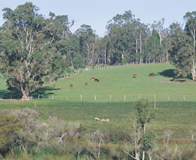 Scenic Drives - Bunbury Collie Donnybrook - Tourism Adelaide
