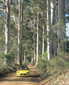 Mount Shadforth Scenic Drive - Tourism Adelaide