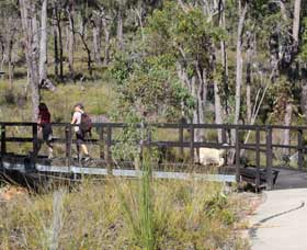 Forest Path Crooked Brook - Tourism Adelaide