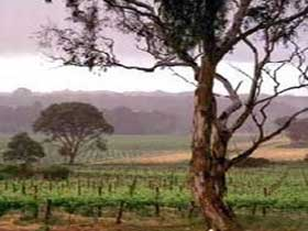 Yangarra Estate Vineyard - Tourism Adelaide
