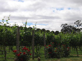 Manyara Vineyard - Tourism Adelaide