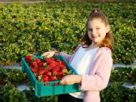 Strawberry Fields - Tourism Adelaide