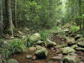 Amamoor State Forest - Tourism Adelaide