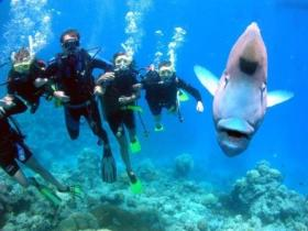 Jew Shoal Dive Site - Tourism Adelaide
