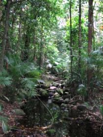Mossman Gorge Rainforest Circuit Track Daintree National Park - Tourism Adelaide
