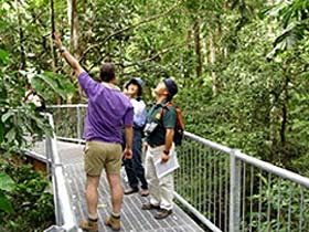 Daintree Discovery Centre - Tourism Adelaide