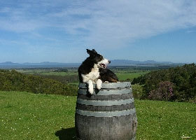 Windy Ridge Vineyard and Winery - Tourism Adelaide