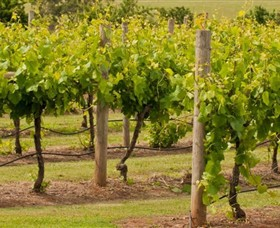 Mt Coghill Vineyard - Tourism Adelaide