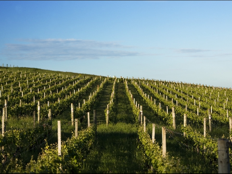 Delamere Vineyard - Tourism Adelaide