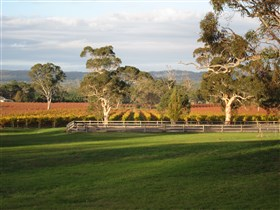 Top Note Vineyard - Tourism Adelaide