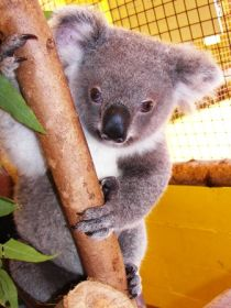 Cooberrie Park Wildlife Sanctuary - Tourism Adelaide