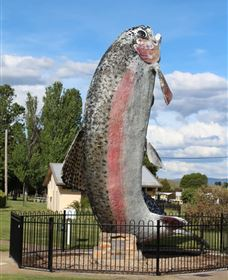 Big Trout - Tourism Adelaide