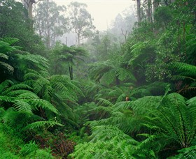 Tarra Bulga National Park - Tourism Adelaide