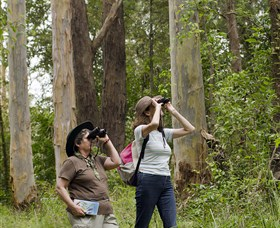 Chichester State Forest - Tourism Adelaide