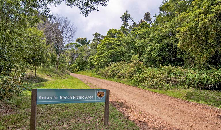 Antarctic Beech picnic area - Tourism Adelaide