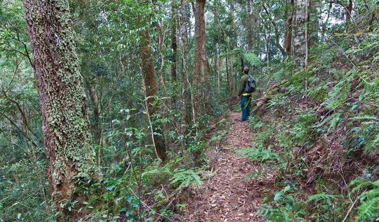 Blackbutt walking track - Tourism Adelaide