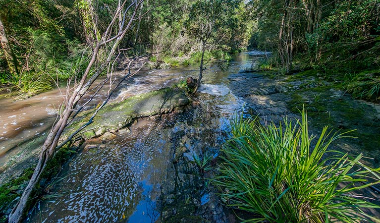 Dawson River walking track - Tourism Adelaide
