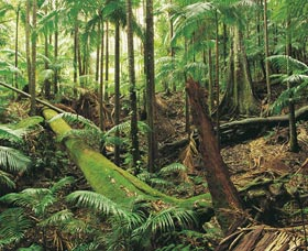 Wollumbin-Mount Warning National Park - Tourism Adelaide