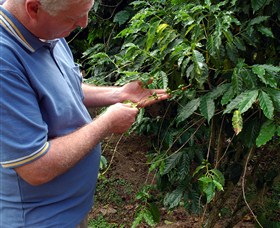 Wombah Coffee Plantation - Tourism Adelaide
