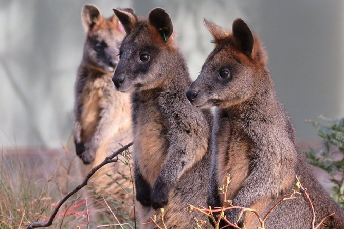 Canberra: Wildlife Encounters at Tidbinbilla Nature Reserve​
