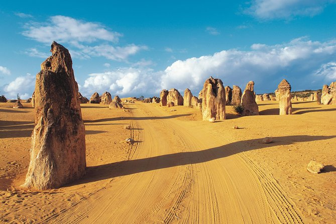 Pinnacles Desert Koalas and Sandboarding WD Day Tour from Perth