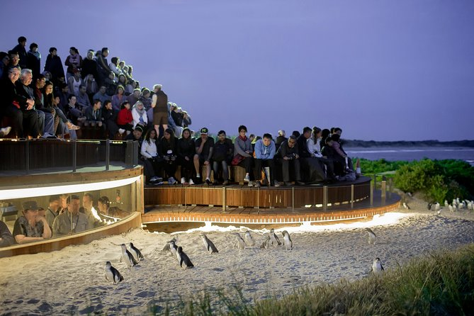 1 Day Private Phillip Island Tour VIP Charter up to 9 People - Tourism Adelaide