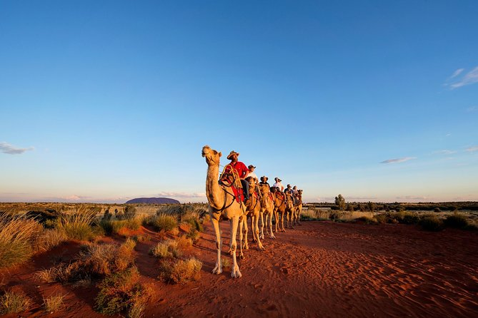 Uluru Camel Express Sunrise or Sunset Tours - Tourism Adelaide