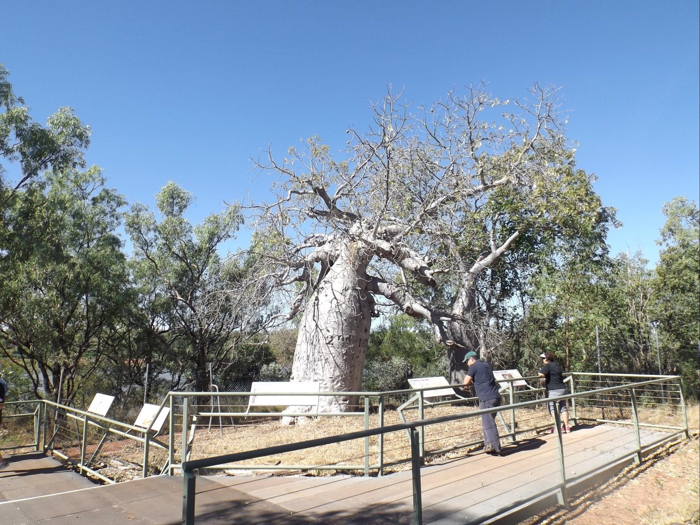 Gregory's Tree Timber Creek - Tourism Adelaide