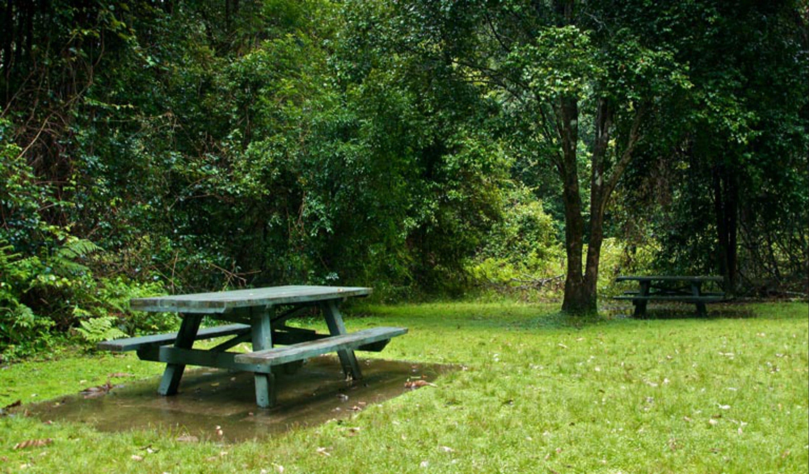 Williams River picnic area - Tourism Adelaide