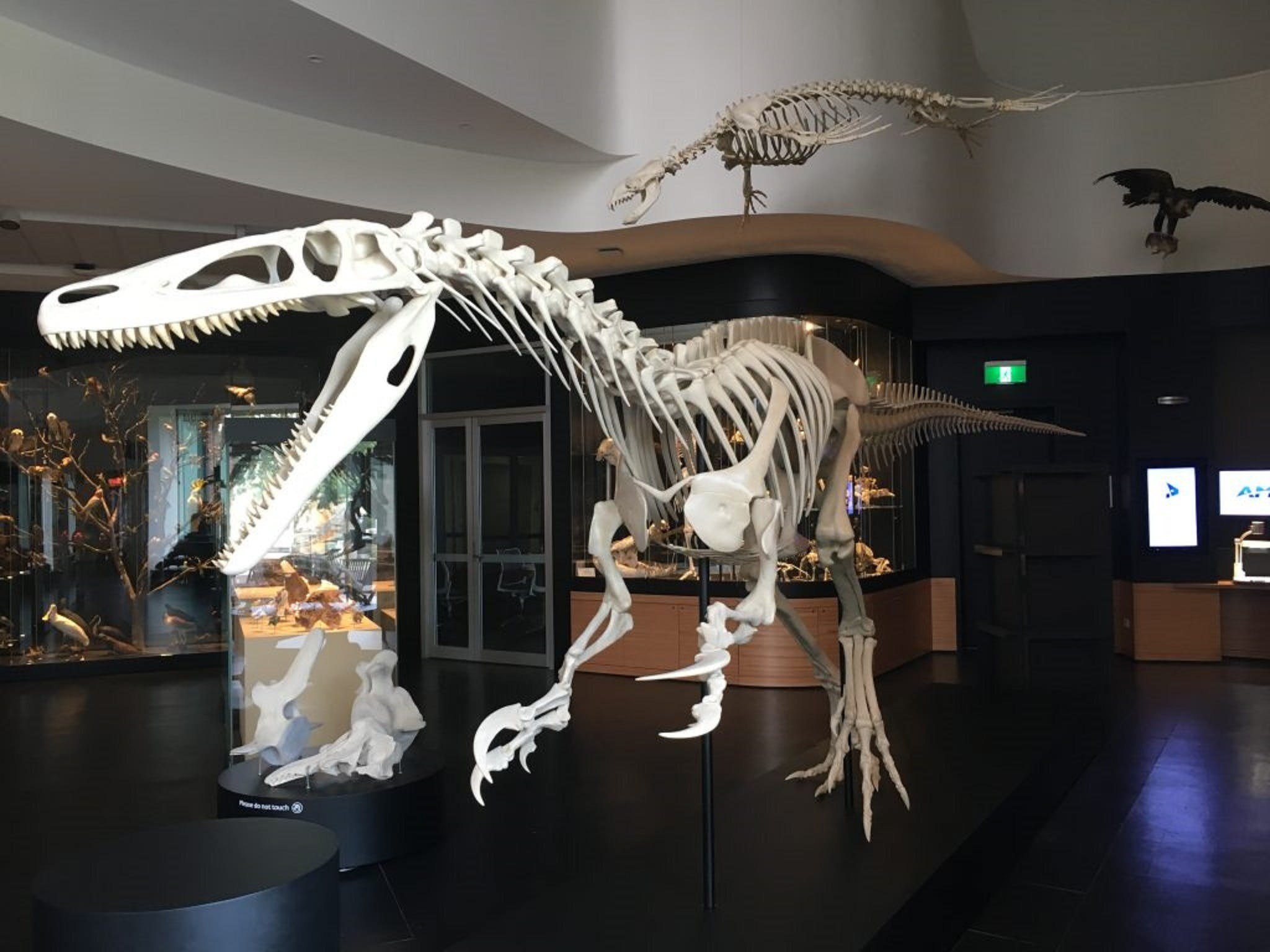 UNE Natural History Museum - Tourism Adelaide