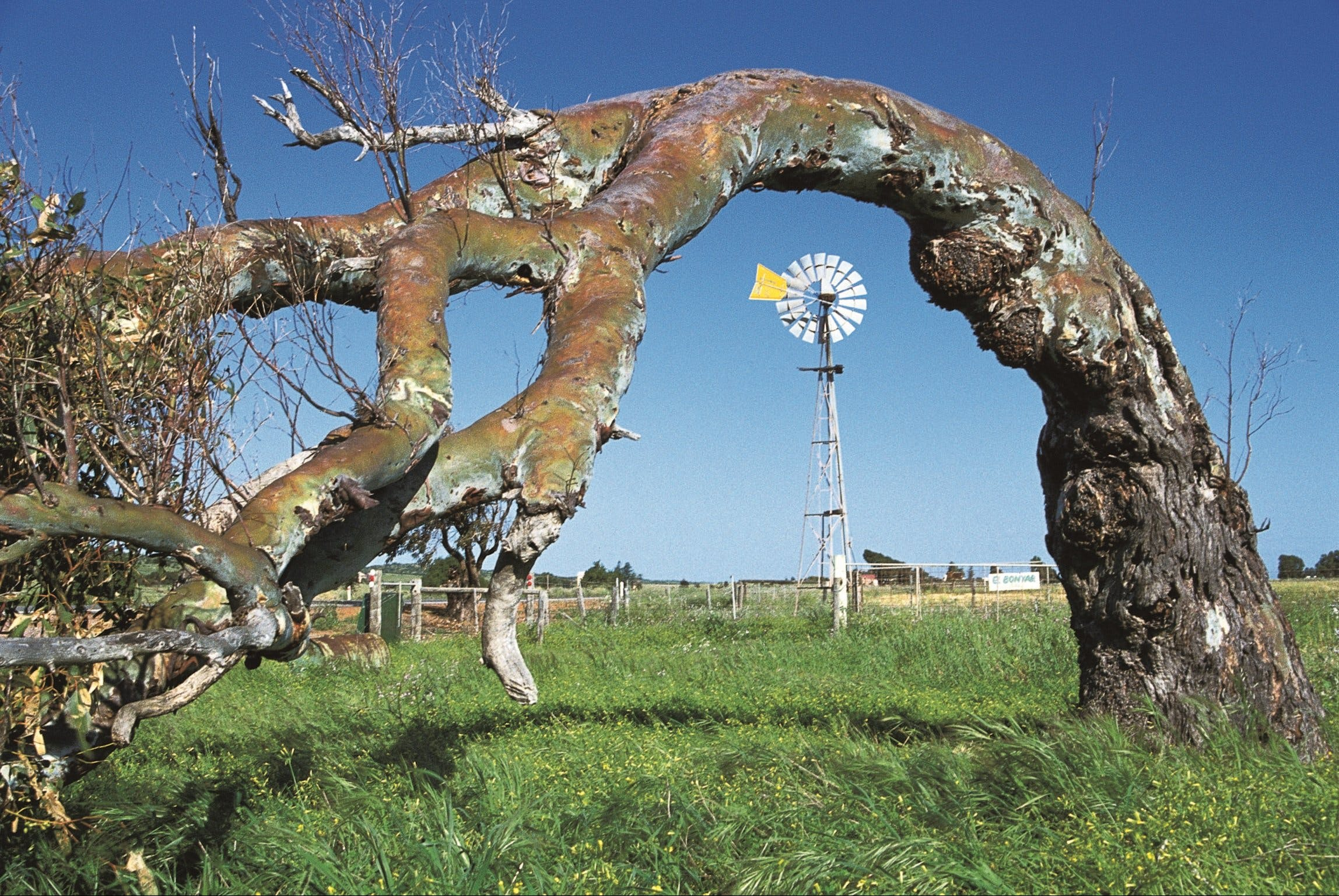 Greenough Leaning Trees - Tourism Adelaide