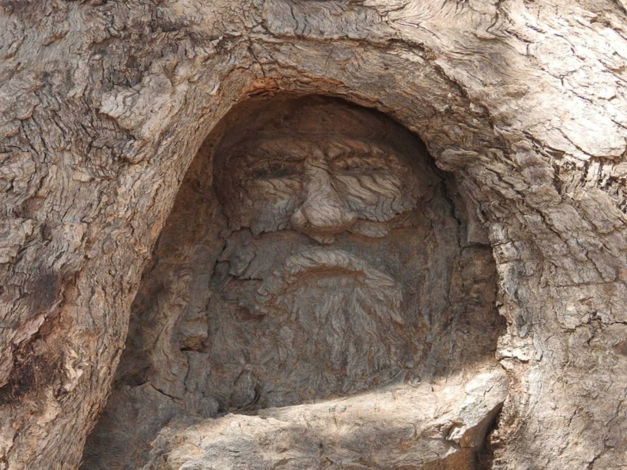 The Face Tree near Burke and Wills Dig Tree - Tourism Adelaide