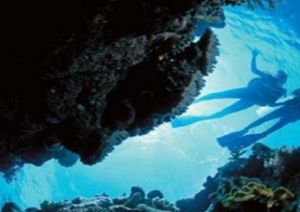 Deep Sea Divers Den - Tourism Adelaide