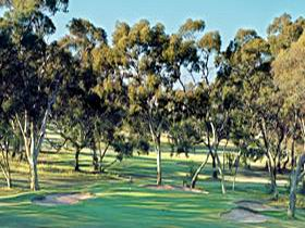 Tanunda Pines Golf Club - Tourism Adelaide