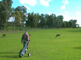 Coffin Bay Golf Club - Tourism Adelaide