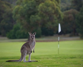 Anglesea Golf Club - Tourism Adelaide
