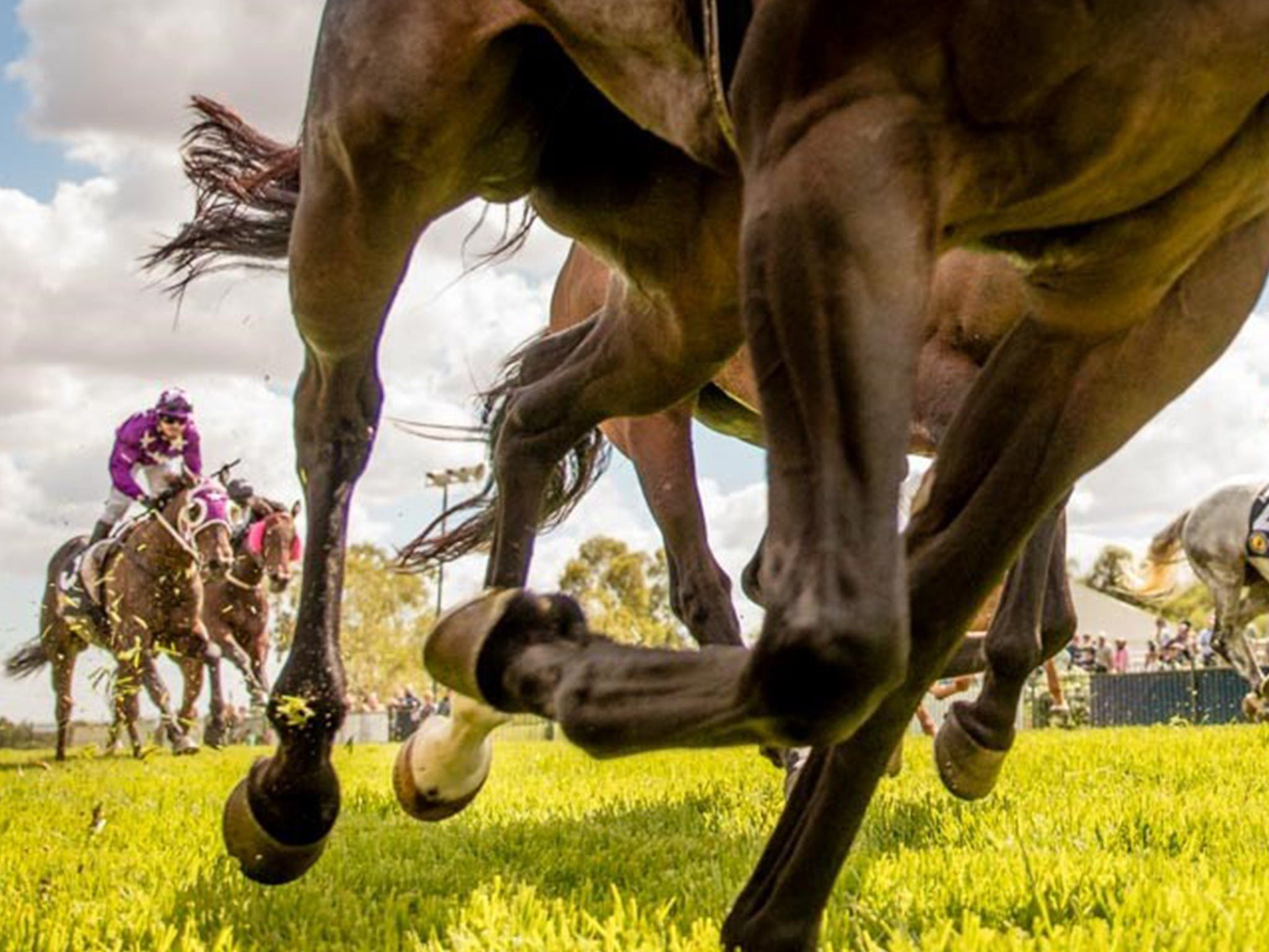 Night Markets and Race Day - Tourism Adelaide